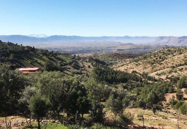 Beni Mellal Region for virgin olive oil