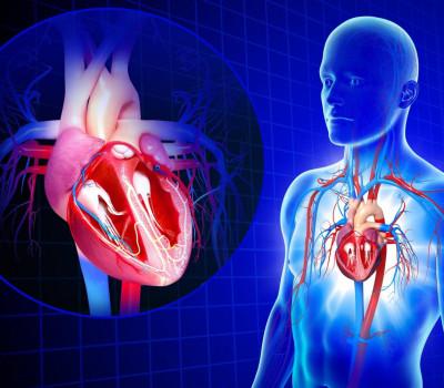 Extra Virgin Olive Oil Cardiovascular System