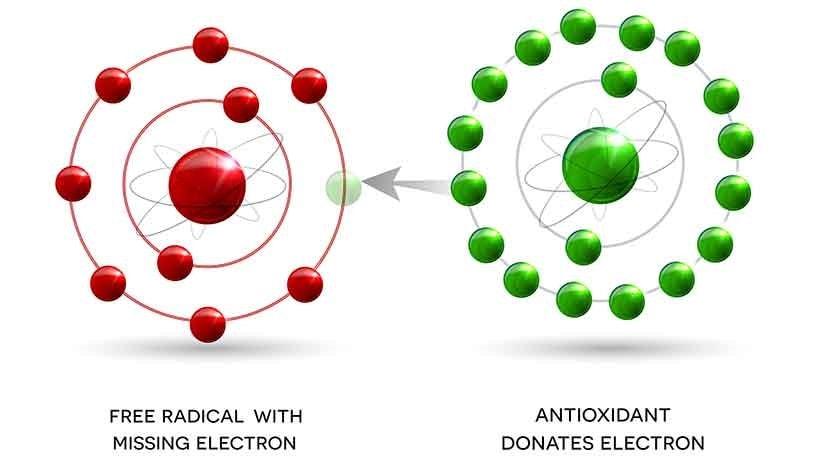 Polyphenols And Free Radicals