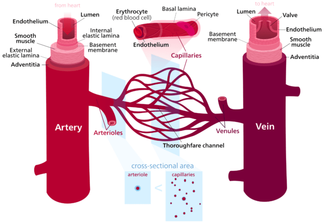 Map Of The Artery