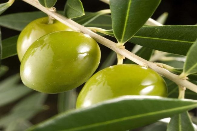 Olive Oil For Athletic Performance