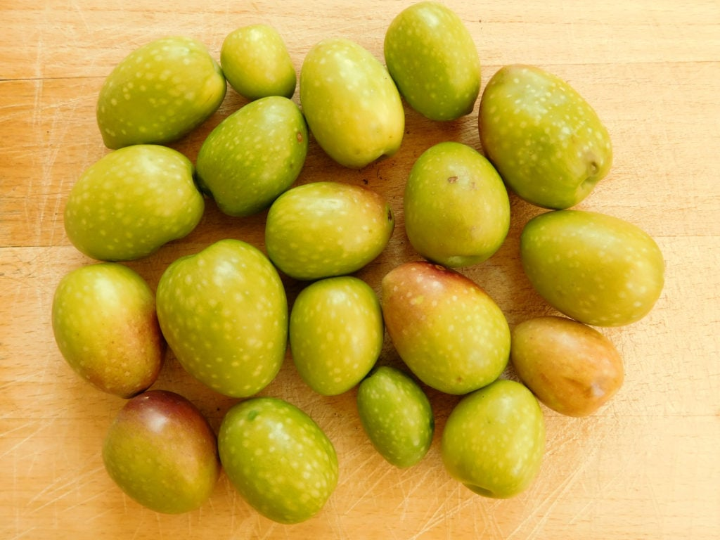 Olives Packed With Polyphenols: Polyphenol content is high in Morocco Gold